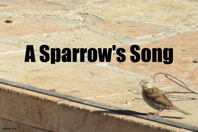 A Sparrow's Song