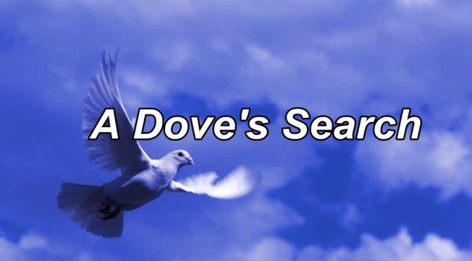A Dove's Search