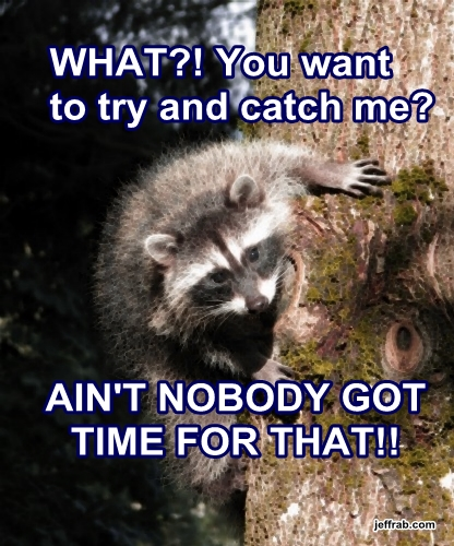 Baby Coon Precious story