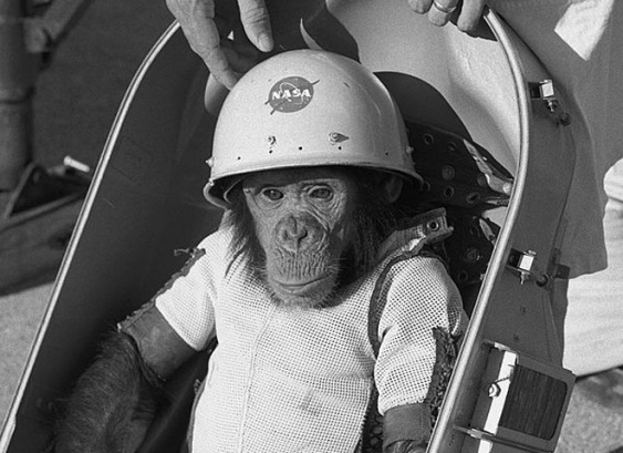 ham-the-chimp-biopack-couch-nasa