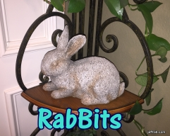 Rabbits 4