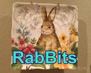 RabBits 11