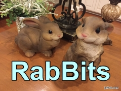 RabBits 22