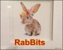 RabBits 23
